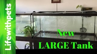 New 75 Gallon Tank Set Up (Part one)