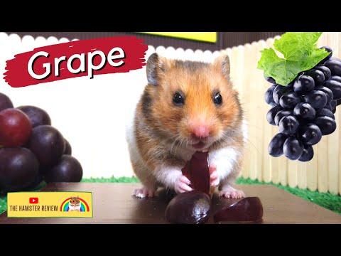 Hamster Eating Grapes: The Hamster Review 🐹 (Animal ASMR)