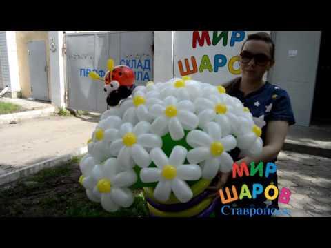 Большой букет ромашек из шаров. Мир Шаров Ставрополь.