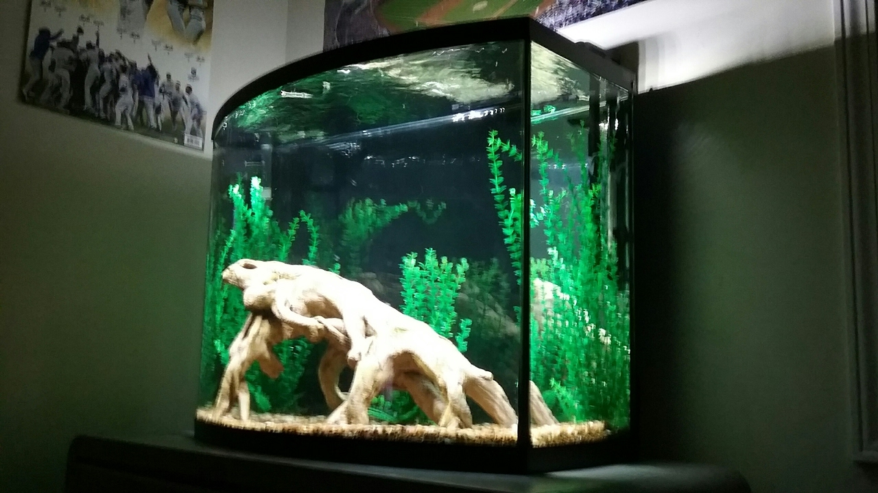 Marineland 38 gallon community aquarium youtube for 38 gallon fish tank