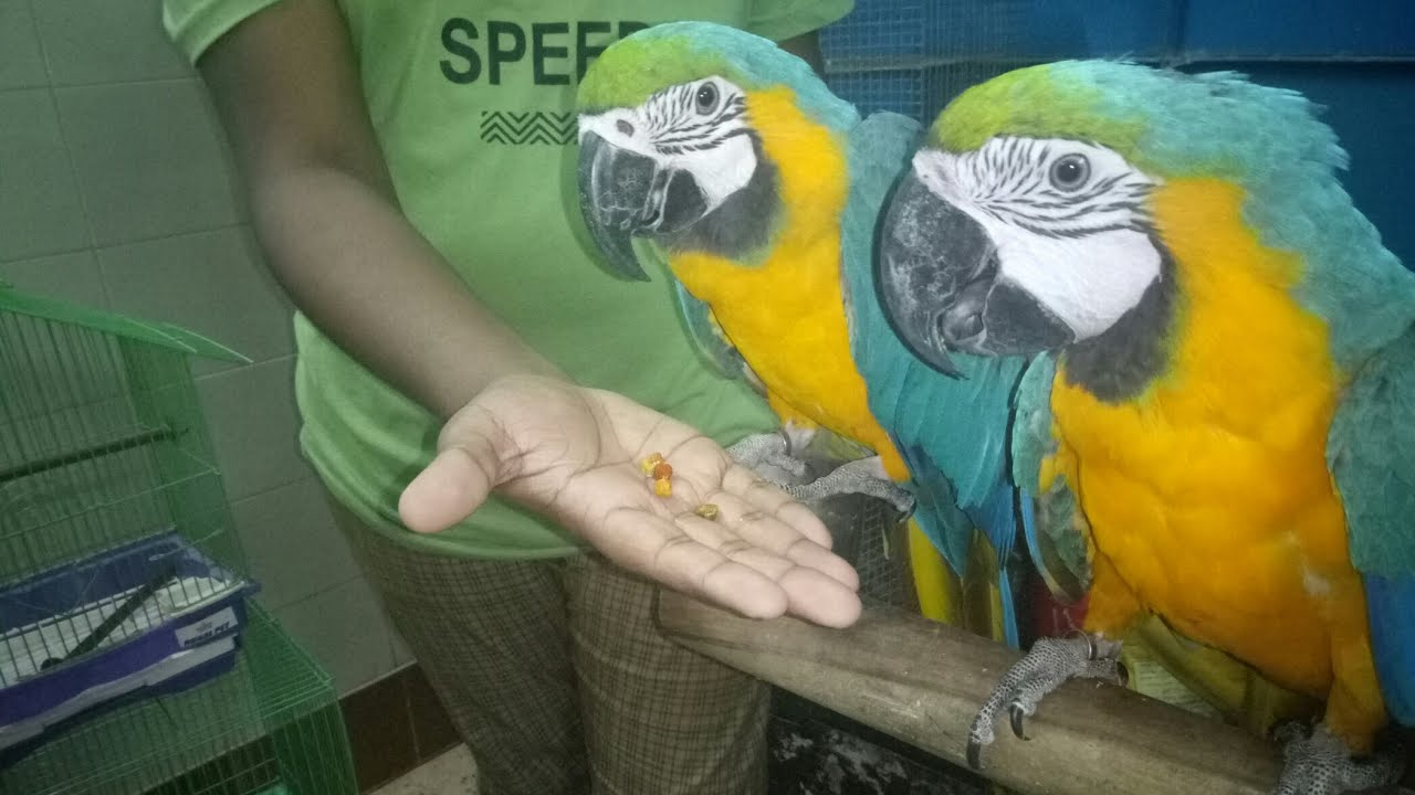PARROT Prices in Delhi, Call (9654209269)
