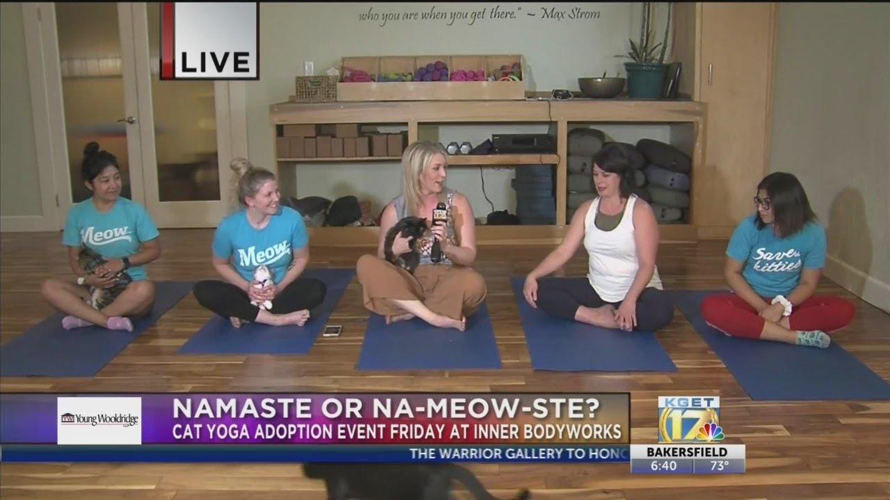 Inner Bodyworks Hosts Cat Yoga Youtube