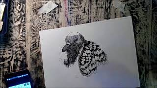 Pigeon- Time Lapse Drawing Video