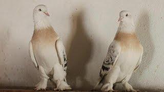 Güvercinleri Uçurdum