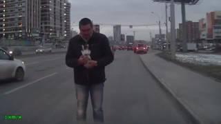 Новосибирск. Котенок на дороге