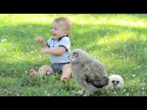 BURKE   Charlotte Video Production   Carolina Raptor Center - Baby Owls