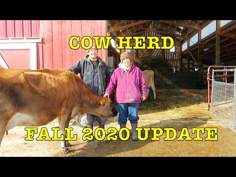 Organic Dairy Cow Herd Update: Pregnancy & Milk Tests, Frost-free Water, Barn, Winter Paddocks, Hay