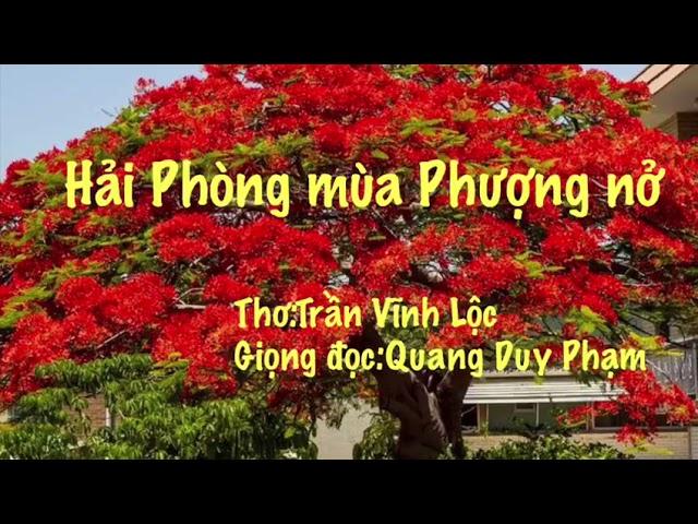 HẢI PHÒNG MÙA PHƯỢNG NỞ ( Thơ ) - Duy Quang Berlin