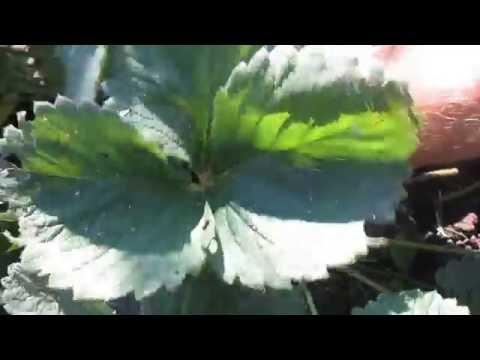 Полезные лекарственные растения: фото, названия и описание