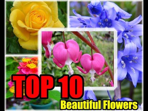 10 อันดับ ดอกไม้ที่สวยที่สุดในโลก ( Top 10 Beatiful Flowers )