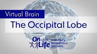 On With Life Virtual Brain - Occipital Lobe