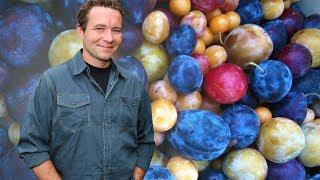 一棵樹竟能長40種水果?藝術家種出奇樹走紅美國!