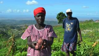 Improving Livelihoods and Access to Food in Northwest Haiti