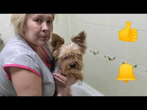 Вопрос: Как предотвратить появление блох на собаке?