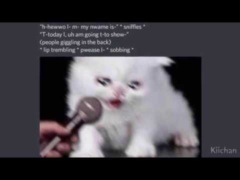 crying cat.exe - YouTube