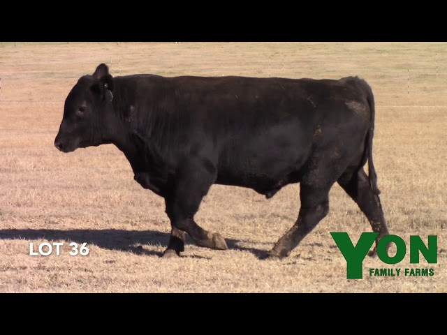 Yon Family Farms Lot 36