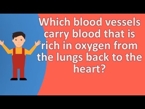 Which blood vessels carry blood that is rich in oxygen from the lungs back to the heart ?  | Health