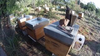 Choix première ruche et bla bla