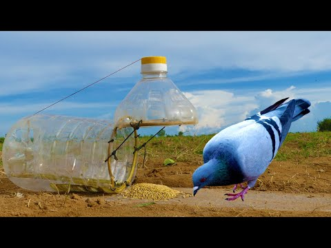 Building Simple Bird Trap make from Plastic Bottle Drop in hole - Technology bird trap