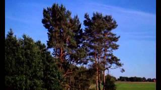 Gesang der Heidelerche in der Kuppendorfer Heide