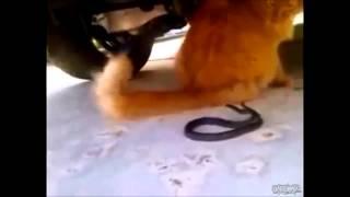 домашние животные прикол Приколы 2014 Лучшие Приколы Смешное Видео