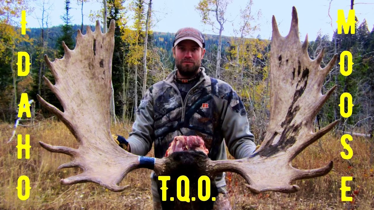 trophy quest outdoors idaho moose hunt youtube