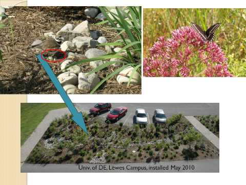Rain Gardens in the Landscape  Funding Opportunities 10 22 13