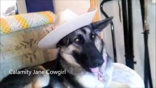 German Shepherd. Wearing Hats. Black Female