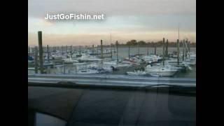 Long Island Sound Blackfish