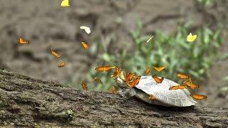 В мире животных. Черепахи и Бабочки