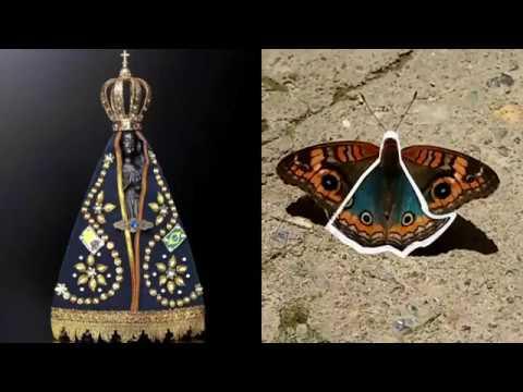 Mito ou Verdade? Borboleta com a figura de Nossa Senhora nas asas.