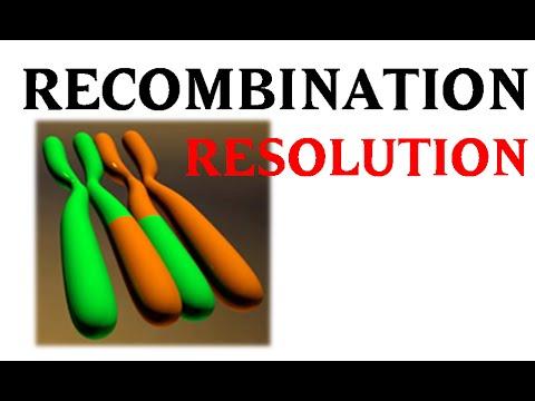Holliday junction resolution