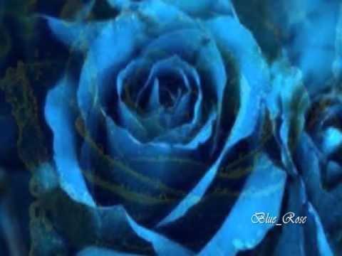 Una Rosa Blu - Michele Zarillo