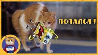 Рыжик - пакостный котик поймал Губку Боба и наелся кактусов
