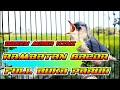 Rambatan Super Gacor Cocok Buat Masteran  Mp3 - Mp4 Download
