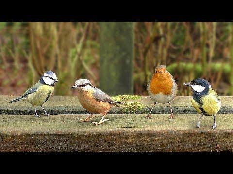Video Per Gatti : Uccelli Che Cinguettano Nel Parco