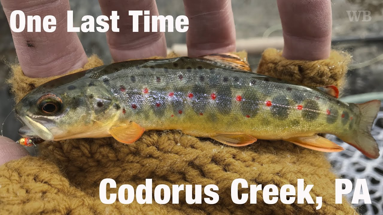 Wb fly fishing one last time codorus creek pa youtube for Free fishing day 2017 pa