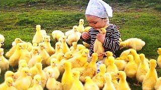 El momento más divertido entre bebés y animales - Compilación de bebés divertidos