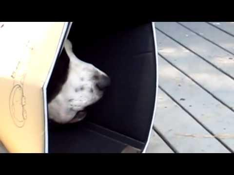 Come abituare il cane al kennel passo per passo - Consigli ...