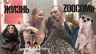 Жизнь ZOOCOMa. Все новости о дикобразах, сурикатах, АЛК, обезьянках и т.д.