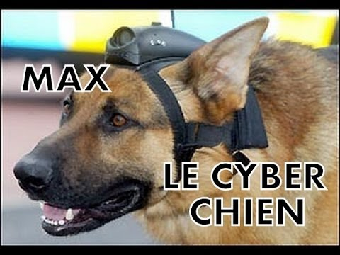 MAX LE CYBER CHIEN - POLICE ANGLAISE