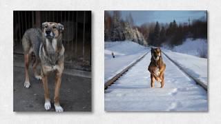 Каждая собака до и после - 2