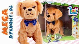 Piesek Goldie • Interaktywny piesek • TM Toys