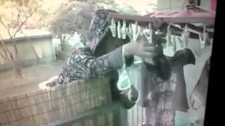 決定的瞬間を防犯カメラは見逃さない! 団地のパンティ&ブラジャー下着泥棒の犯行の瞬間を捉えた Underwear Thief Ladrão de cueca 속옷 도둑 Sous Thief