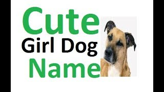 Cute Girl DOg Name ! Cute Dog Name ! Best Dog Name !