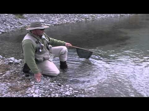 Fly Fishing For Trout In New Zealand