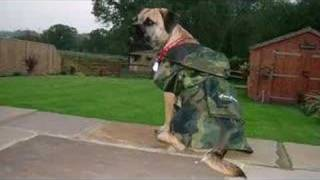 "Border Terrier Dog - ""loving You Always"""