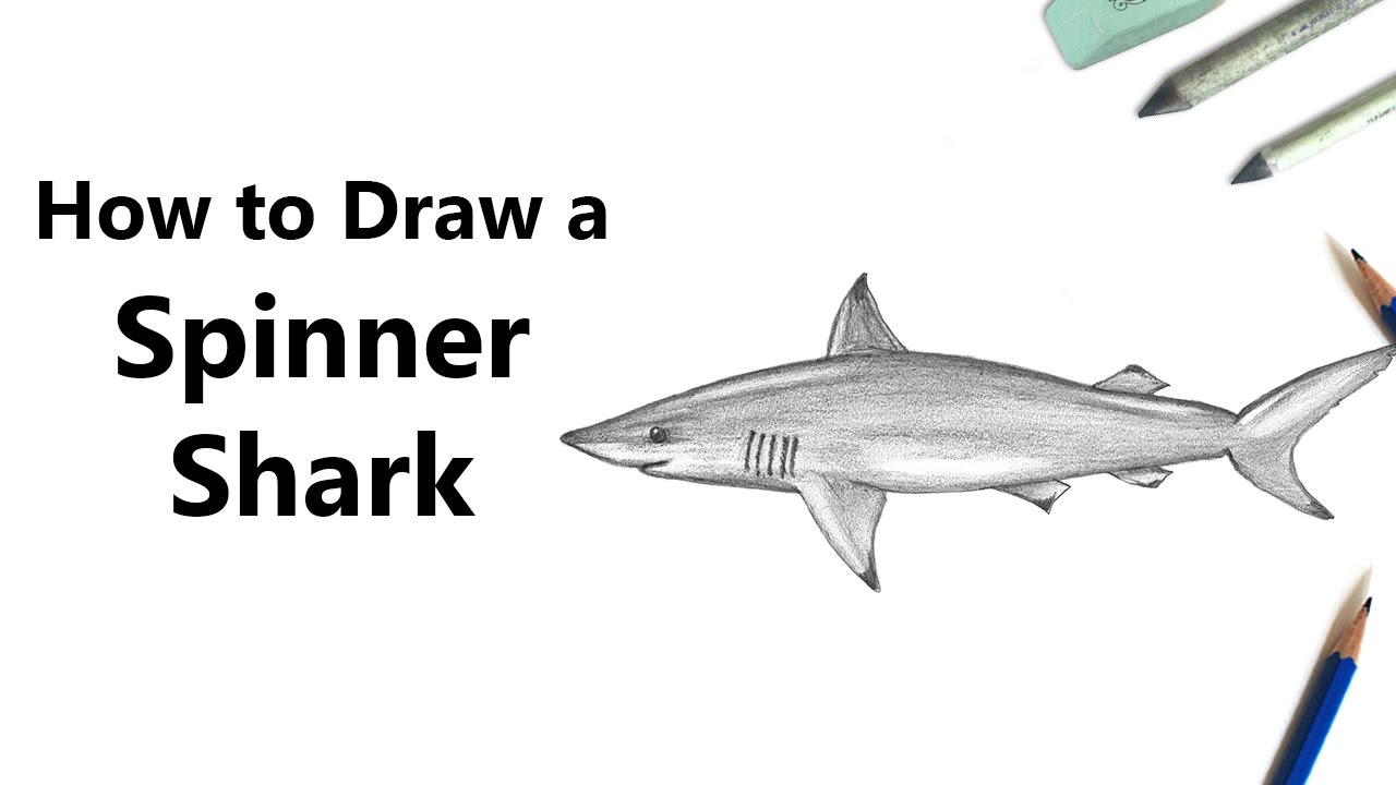 Uncategorized How To Draw A Tiger Shark how to draw a spinner shark with pencils time lapse youtube lapse