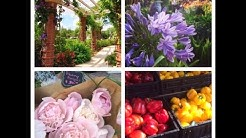 FARMER'S MARKET WINTER PARK, FLORIDA