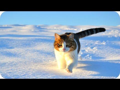 ТОП-7 самых смешных животных в природе -